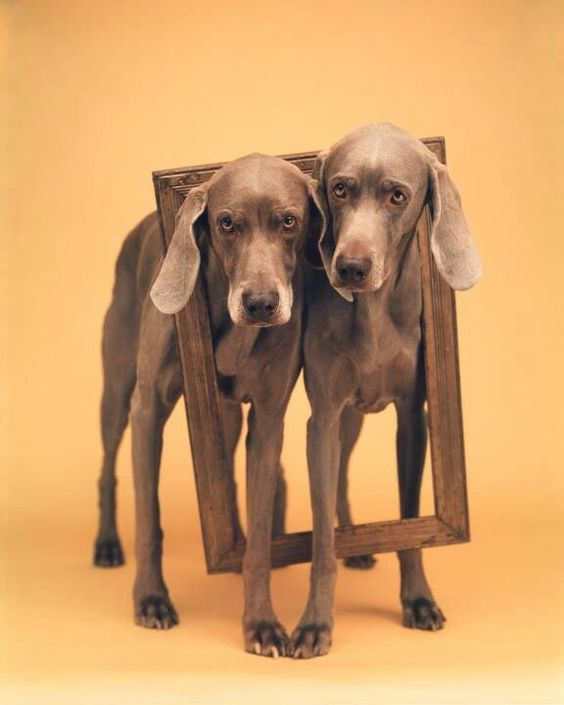 william_wegman1