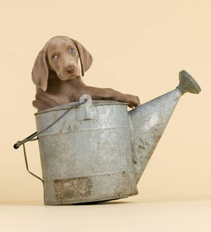 william_wegman10