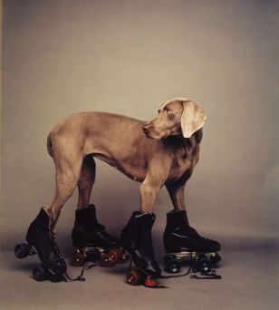 william_wegman11