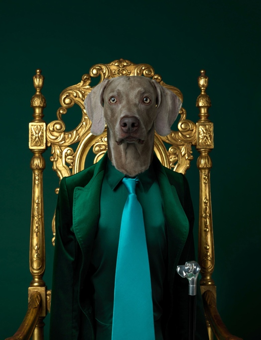 william_wegman12