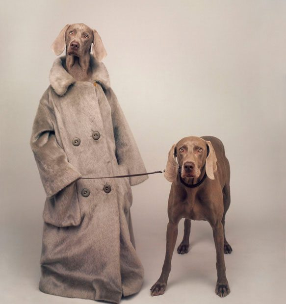 william_wegman3.jpg