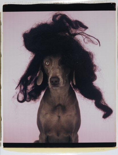 william_wegman4
