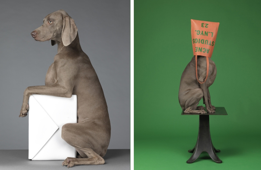 william_wegman5.jpg