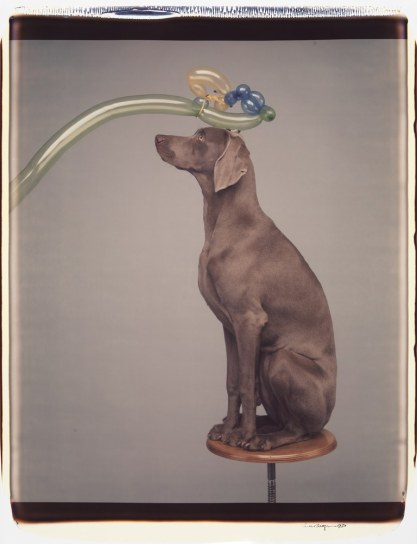 william_wegman6