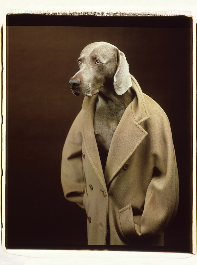 william_wegman9.jpg
